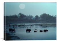 Elephant Crossing, Canvas Print