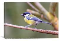 Blue Bird, Canvas Print