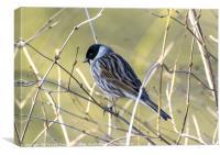 A Bird In The Bush, Canvas Print