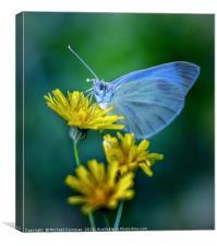 Blue On Yellow, Canvas Print