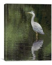 Cool Heron, Canvas Print