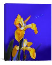 Blue To Yellow, Canvas Print