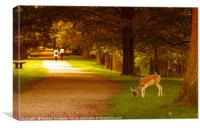 Walk in the park., Canvas Print