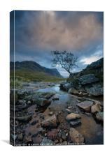 Tree in Motion at Glencoe, Canvas Print