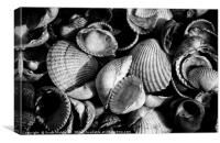 Cockle Shells, Canvas Print