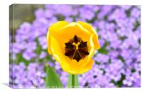 Yellow Tulip with purple floral background, Canvas Print