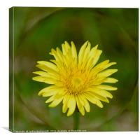 Dandelion with a sphere round it , Canvas Print