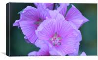 lots of little purple flowers, Canvas Print