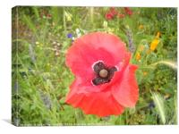Red poppy type flower with other smaller flowers, Canvas Print