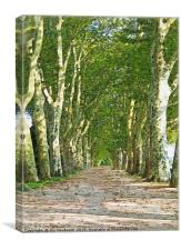 Tree Avenue, Canvas Print