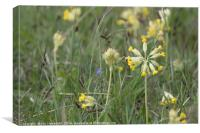 Cowslips, Canvas Print