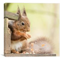 Messy Red Squirrel, Canvas Print