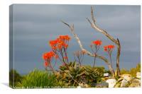 Life on Robben Island, Canvas Print