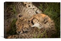 Cheetah Love, Canvas Print