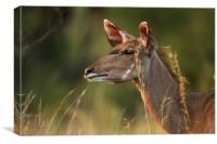 Female Kudu Profile, Canvas Print