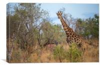 African Wildlife, Canvas Print