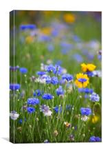 Wild Spring Flowers, Canvas Print