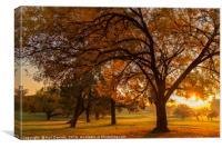Autumn Morning , Canvas Print