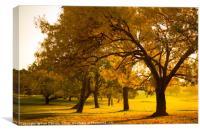 Autumn Morning Sun, Canvas Print