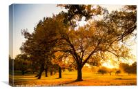 Autumn Mornings, Canvas Print