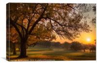 Golf Course Sun Rise, Canvas Print