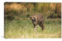 Cheetah In the Open, Canvas Print