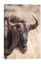 Wildebeest, Canvas Print