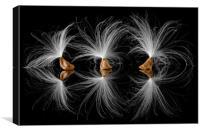 Milkweed seeds, Canvas Print