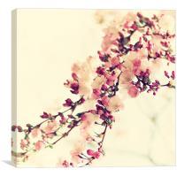 Cherry bloosom Still life , Canvas Print