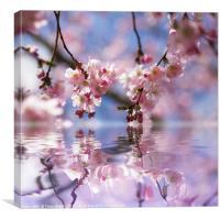 Wonderland Cherry bloosoms, Canvas Print