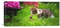Curious Cat, Canvas Print