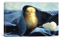 Little chick  , Canvas Print