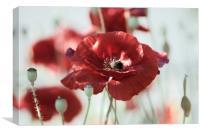 Poppies Art , Canvas Print