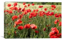 Field poppies, Canvas Print