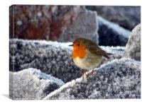 Frosty Robin on Cromarty sea wall, Canvas Print