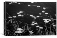 Dock Tarn, Canvas Print