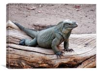 large green iguana, Canvas Print