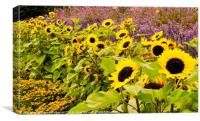 Sunshine Flowers, Canvas Print