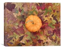 Real pumpkin surrounded with fading Autumn foliage, Canvas Print
