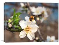 bee hover onto a flower, Canvas Print