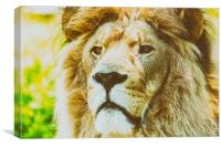 Wild Lion King Feline In Safari Portrait, Canvas Print