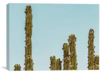 Green Cactus Fields In Summer, Canvas Print