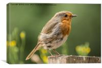 Windswept Robin, Canvas Print
