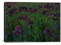 Poppy Meadow, Canvas Print