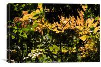 A leaf pattern, Canvas Print