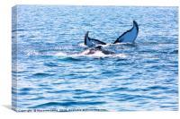 Whale, cape cod, Canvas Print