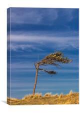 LONE TREE SURVIVOR, Canvas Print