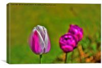Tulips in the park., Canvas Print