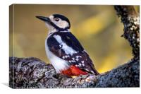 Great Spotted Woodpecker , Canvas Print