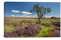 Heather in Teesdale, Canvas Print